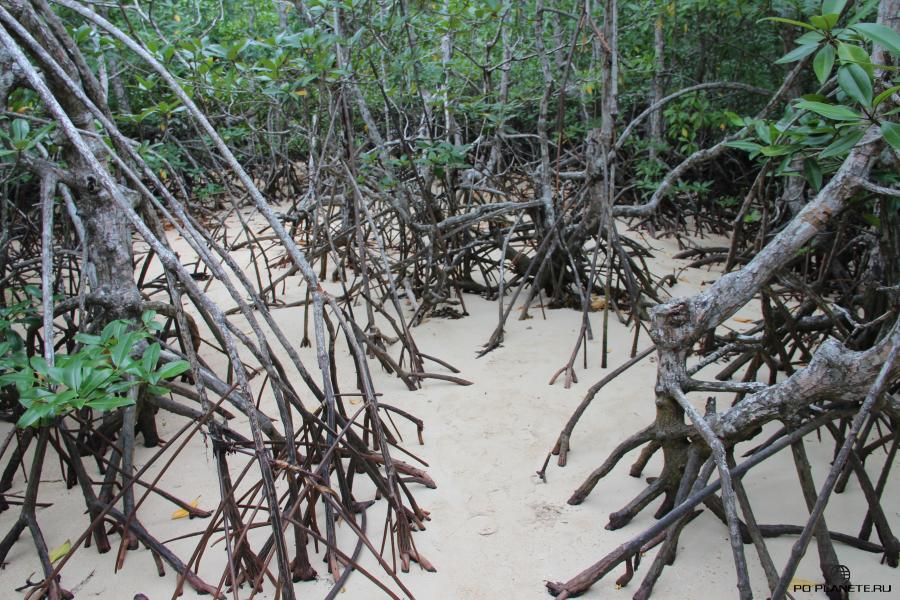 Мангровые заросли на Snake Island