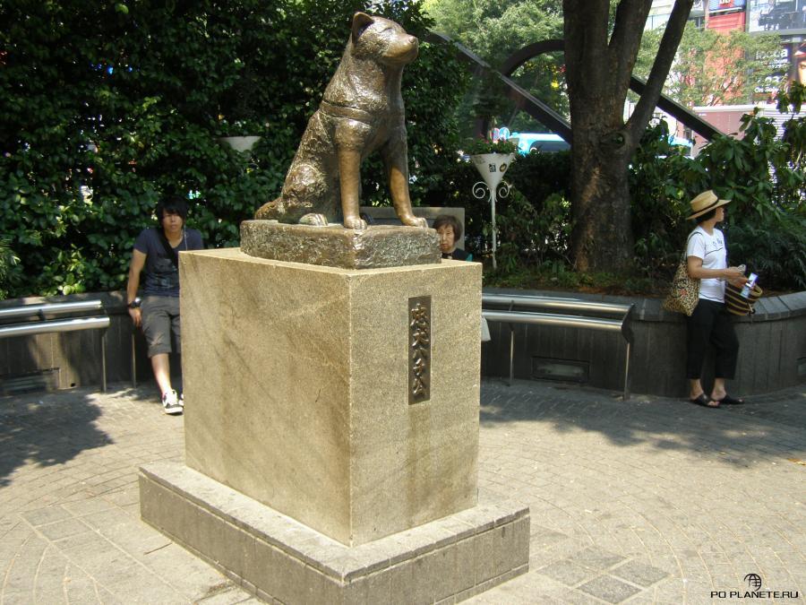 У станции Сибуя стоит бронзовый памятник собачке Хатико