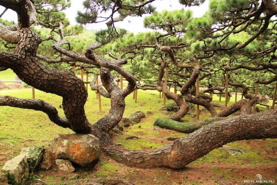 Окинава: путешествие в «неяпонскую» Японию
