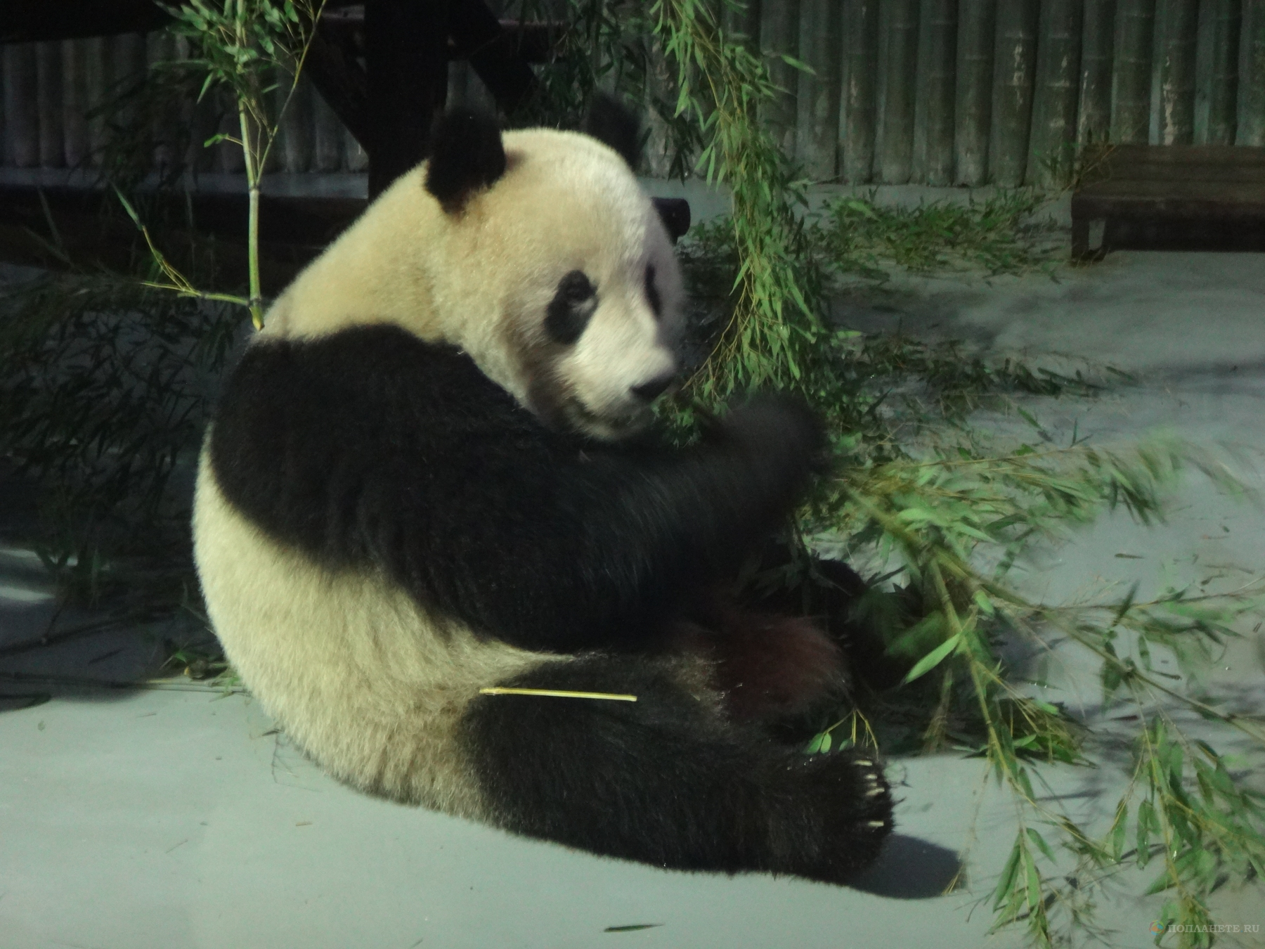 Прогулки по Шанхаю. Зоопарк