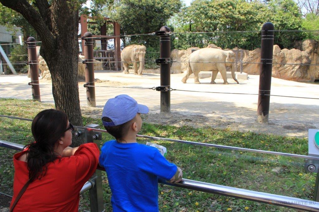 Зоопарк Уэно в Токио
